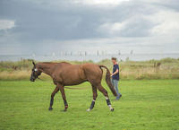 13-34-LMd1217-William-Fox-Pitt-GBR-Chilli-Morning